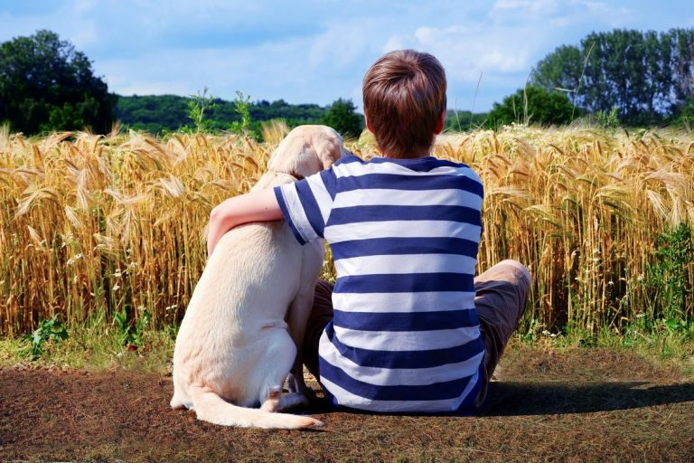 a dog sits next to a boy who has his arm around him, viewed from behind while they look over a field of wheat