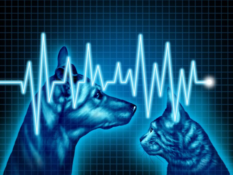 an illustration in blue of a dog and cat facing each other with a line tracing of a heart beat across it