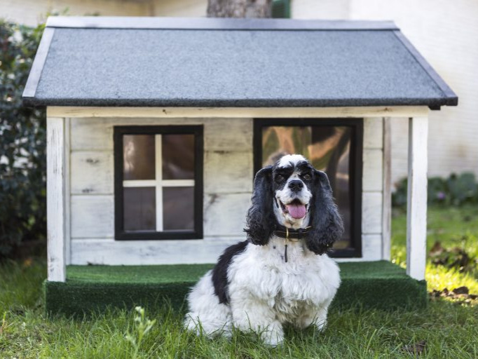 a small black and white dog sitting on a lawn in front of a cute dog house
