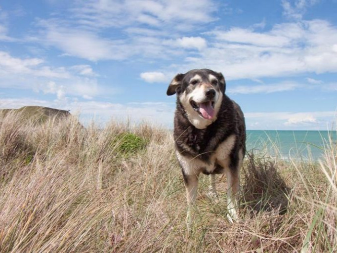 a dog stands on a hill in long grass with a large body of water behind them extending into the distance