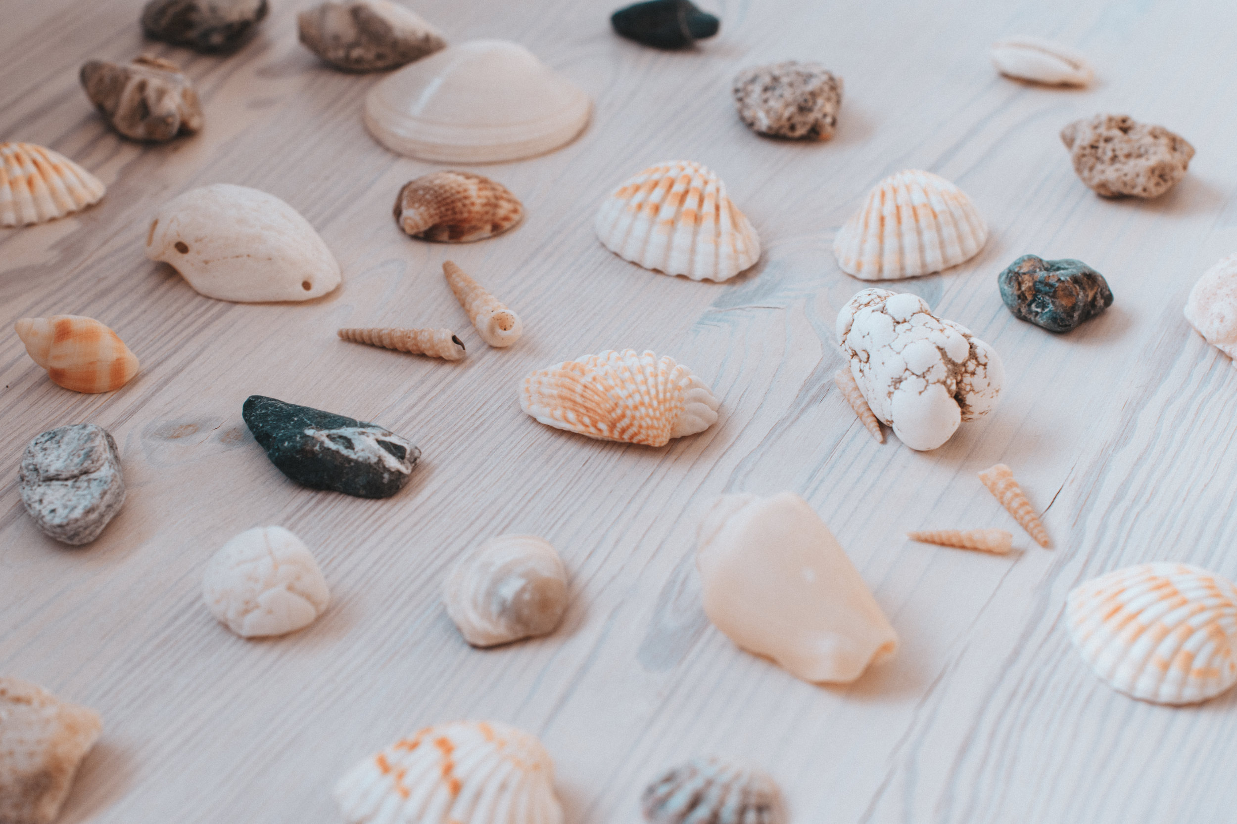 Set up a shell decorating table as an activity at a mermaid birthday party. | Mermaid Birthday Party ideas from LYFETYMES party planning website.