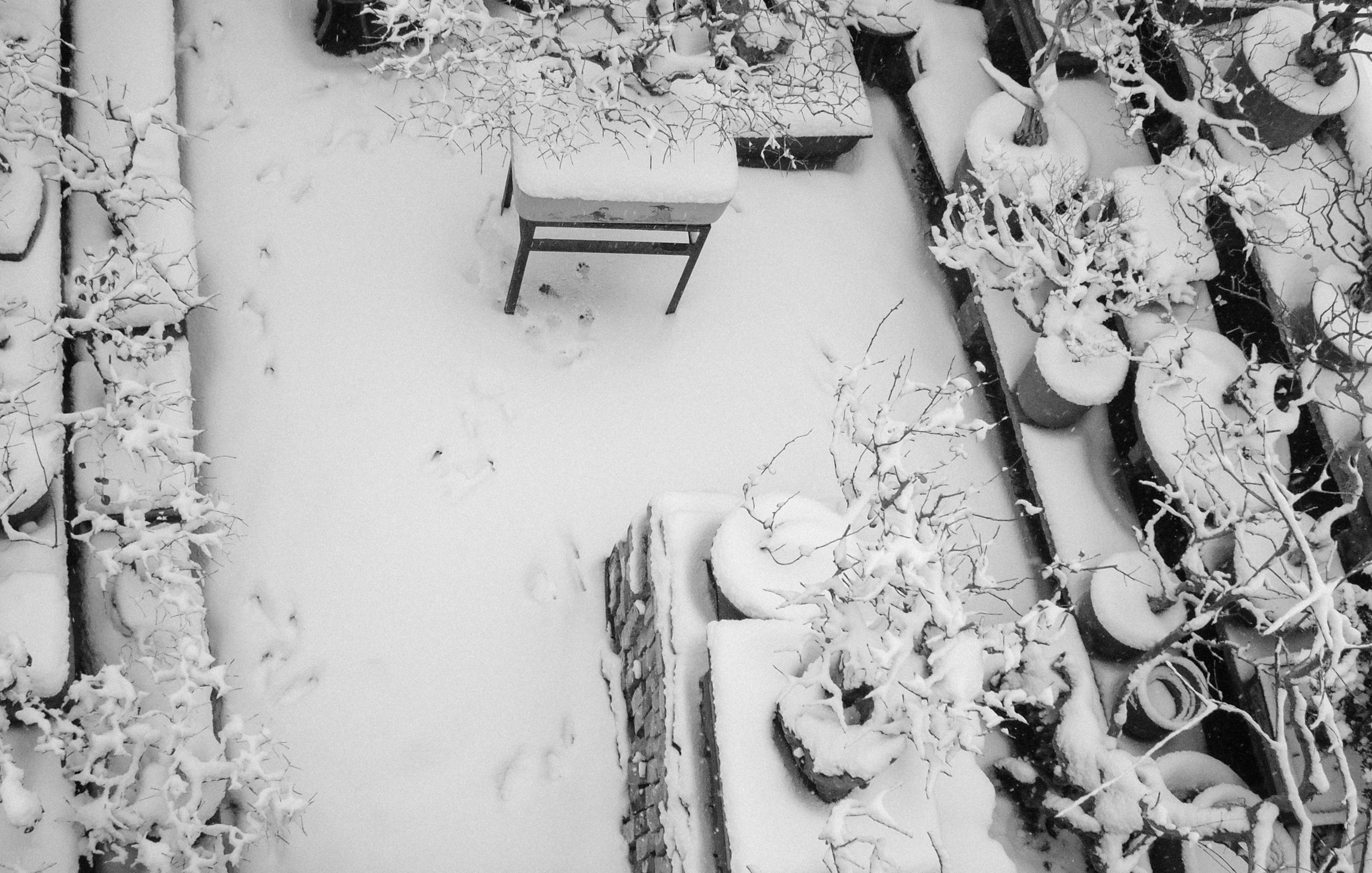 Second small garden of the old house and grandpa's bonsai in snow, 2002