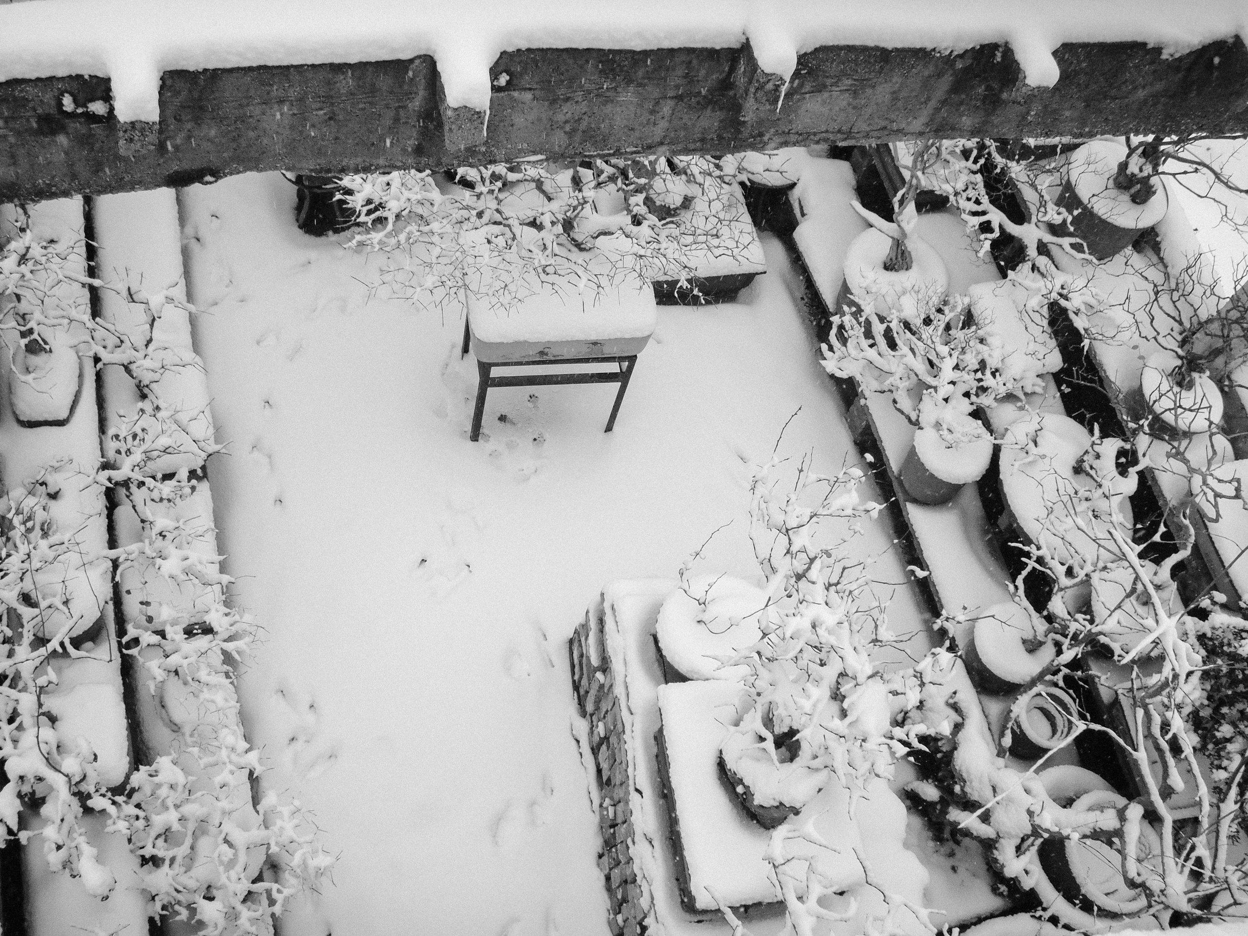 Second small garden and grandpa's bonsai in snow. 2011