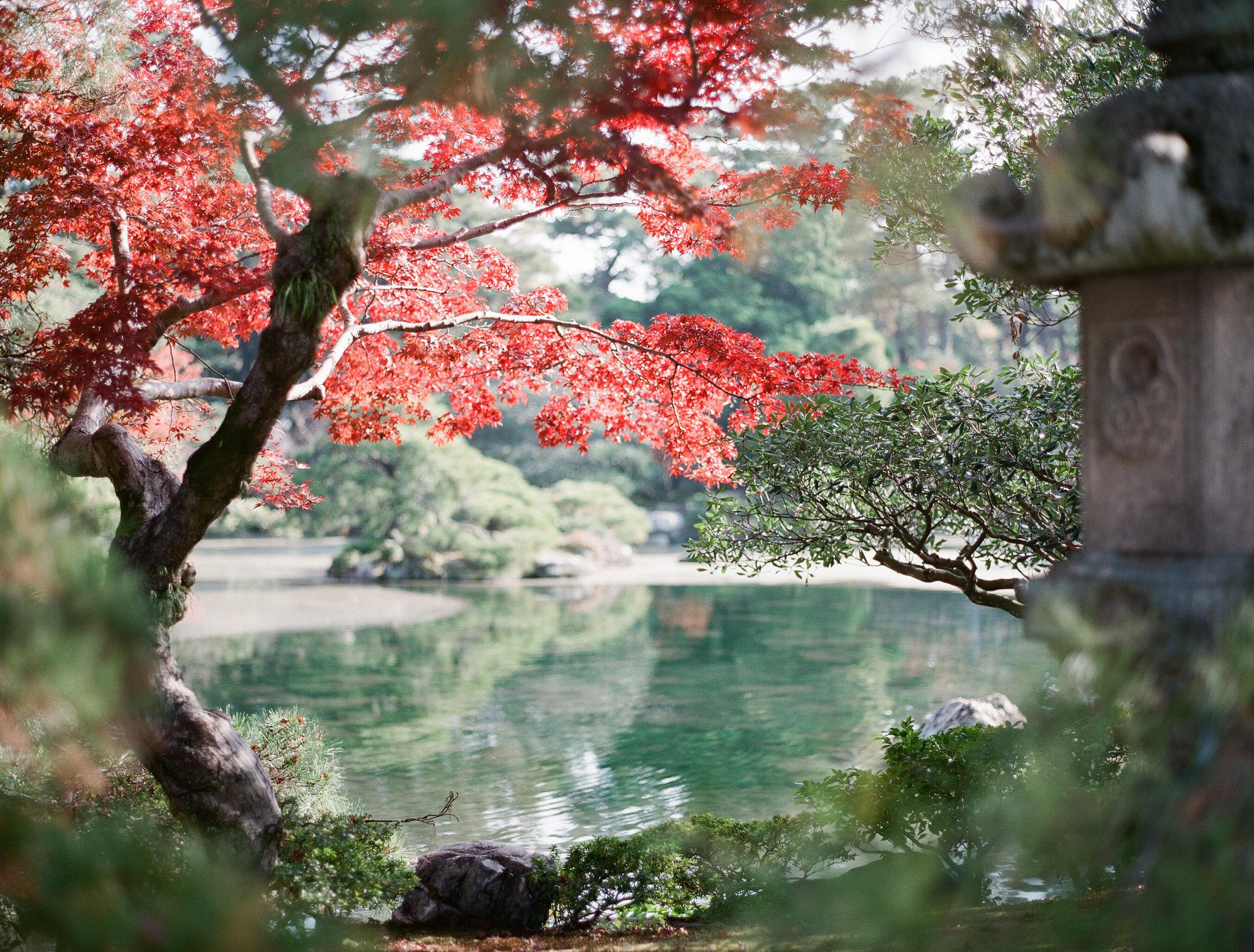 A pond in Kyoto Gyoen, (peeking through shrubs)