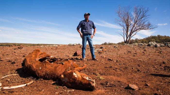 Greg Jerry, owner of a 3,300 hectare farm near the town of Coonabarabran in NSW, has lost 60 sheep and a dozen cows to the drought © Graham Jepson/FT