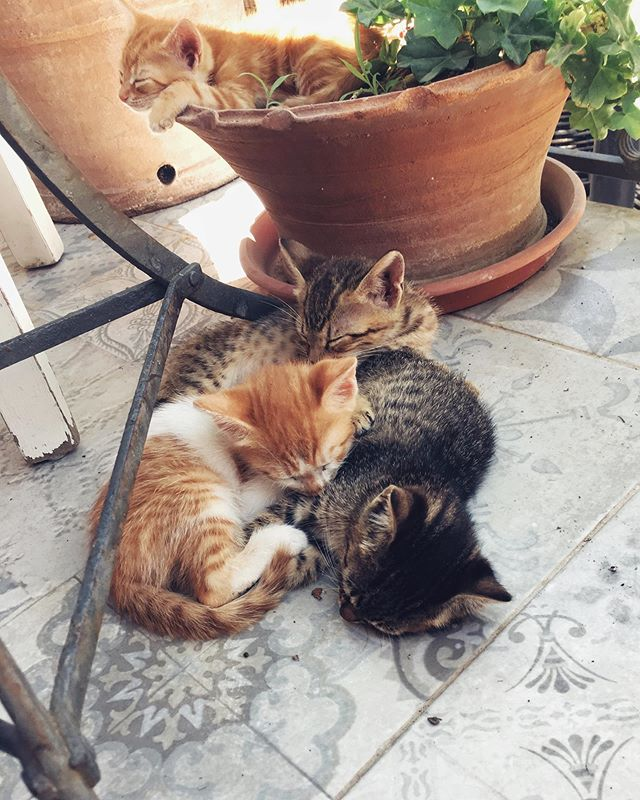 This. At my feet. Right now. Animals are pure love. Anyone up for adopting one of these four cute Cretan kittens? #adoptdontshop #kittens_of_instagram #kittenlife #kittenlove