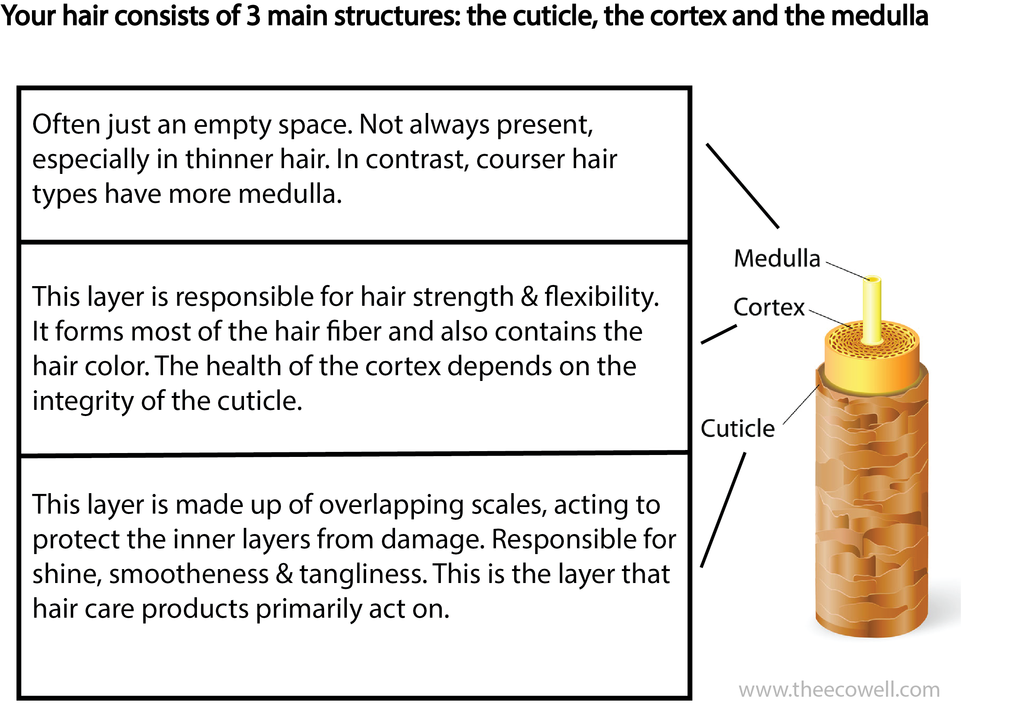 hair_structure_1024x1024.png