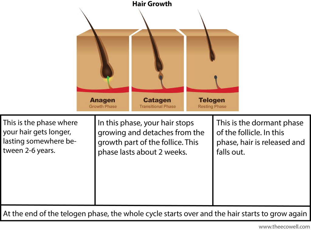 hair_growth_1024x1024.png
