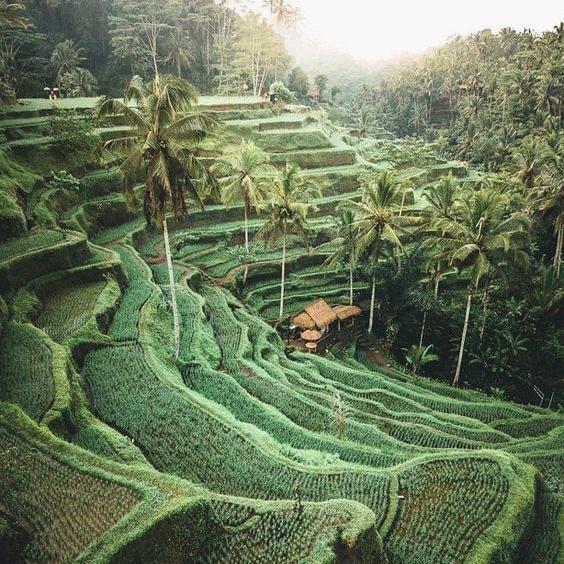 island of bali -