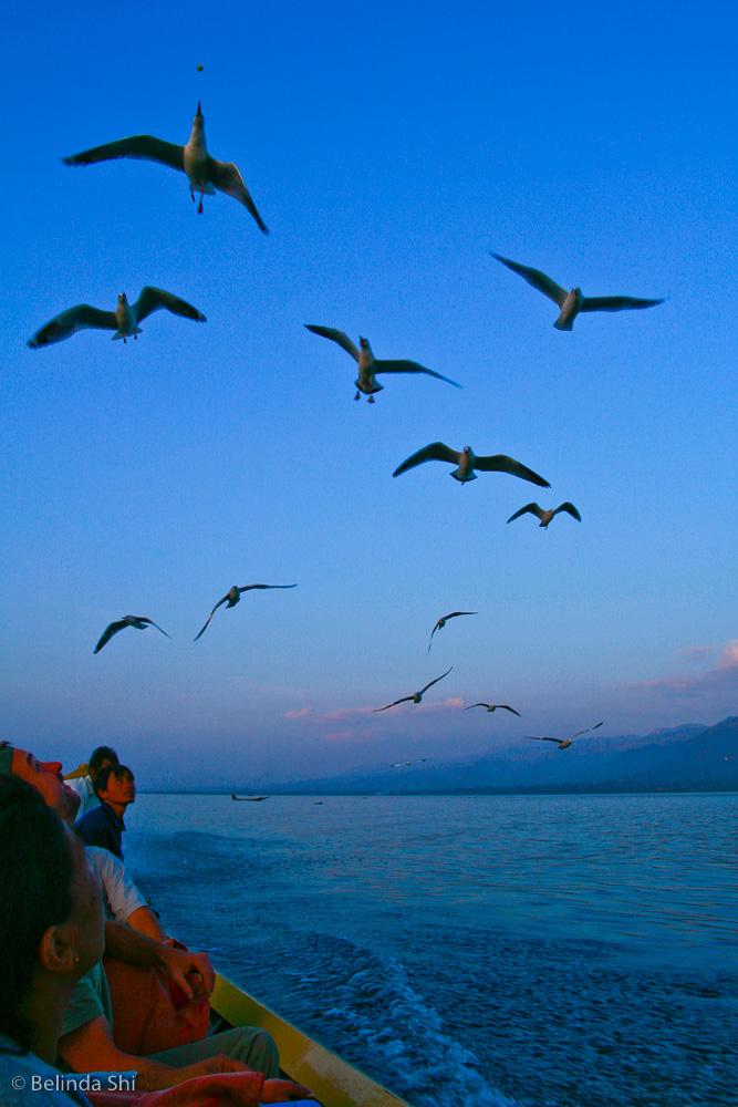 food-hunting-seaguls.jpg
