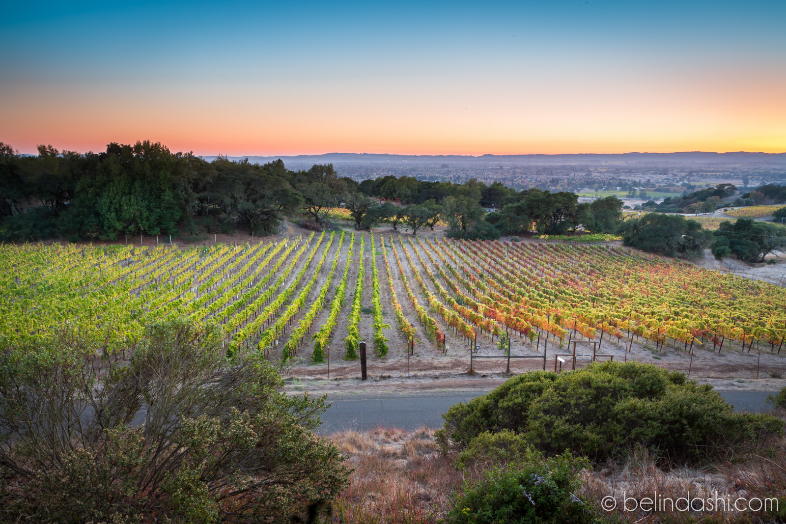 Day 71 - Sunset at Paradise Ridge Winery Sonoma CA