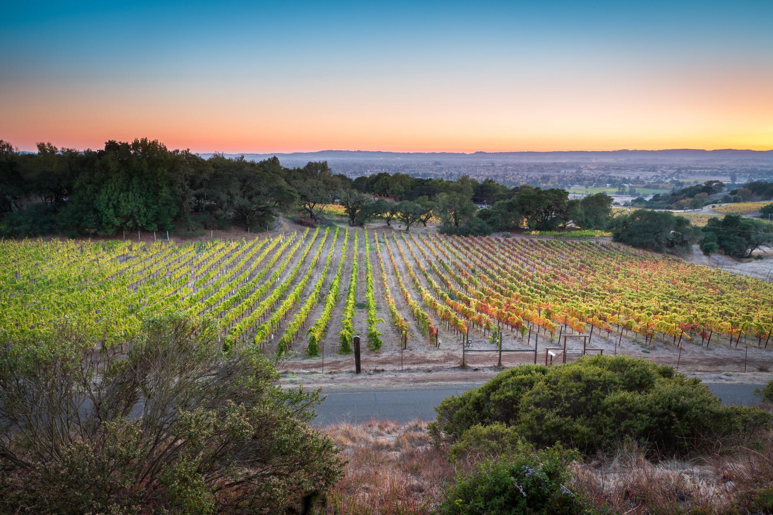 Day 71 - Sunset at Paradise Ridge Winery Sonoma CA-007.jpg