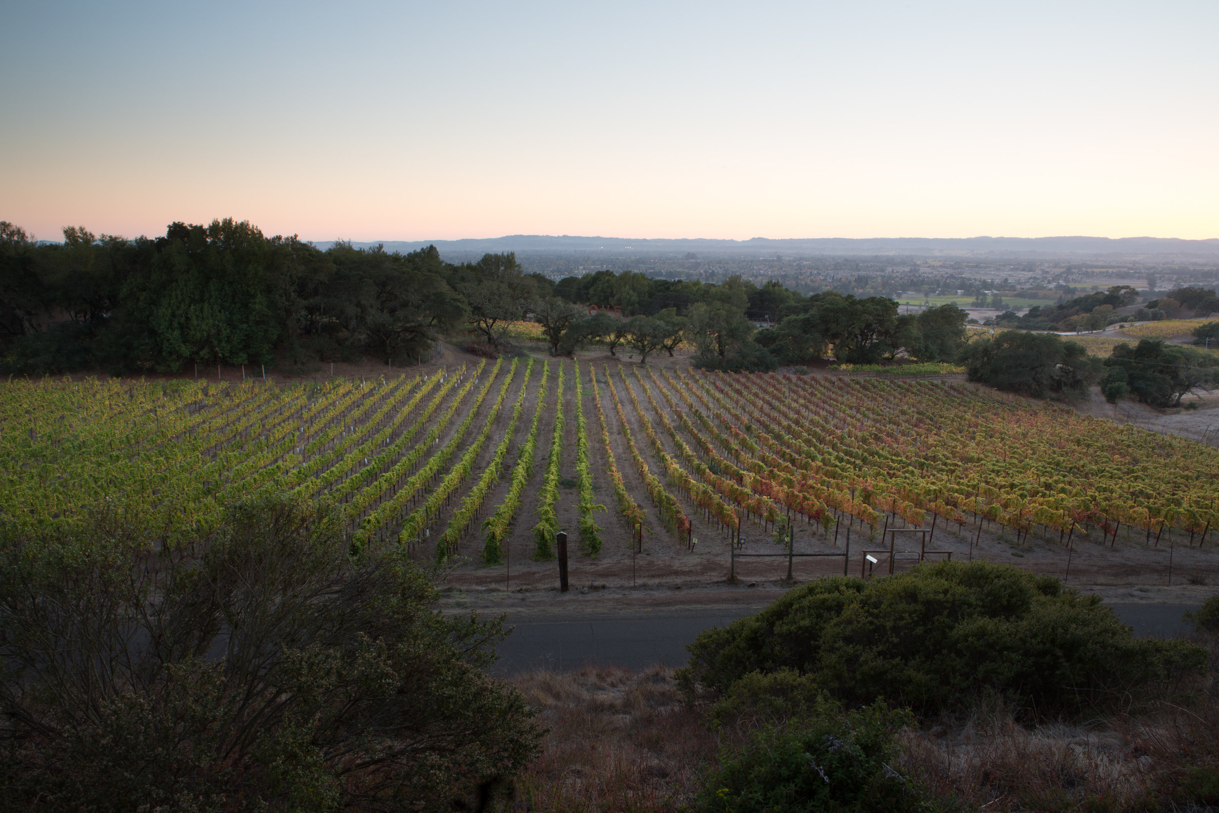 Day 71 - Sunset at Paradise Ridge Winery Sonoma CA-007-2.jpg
