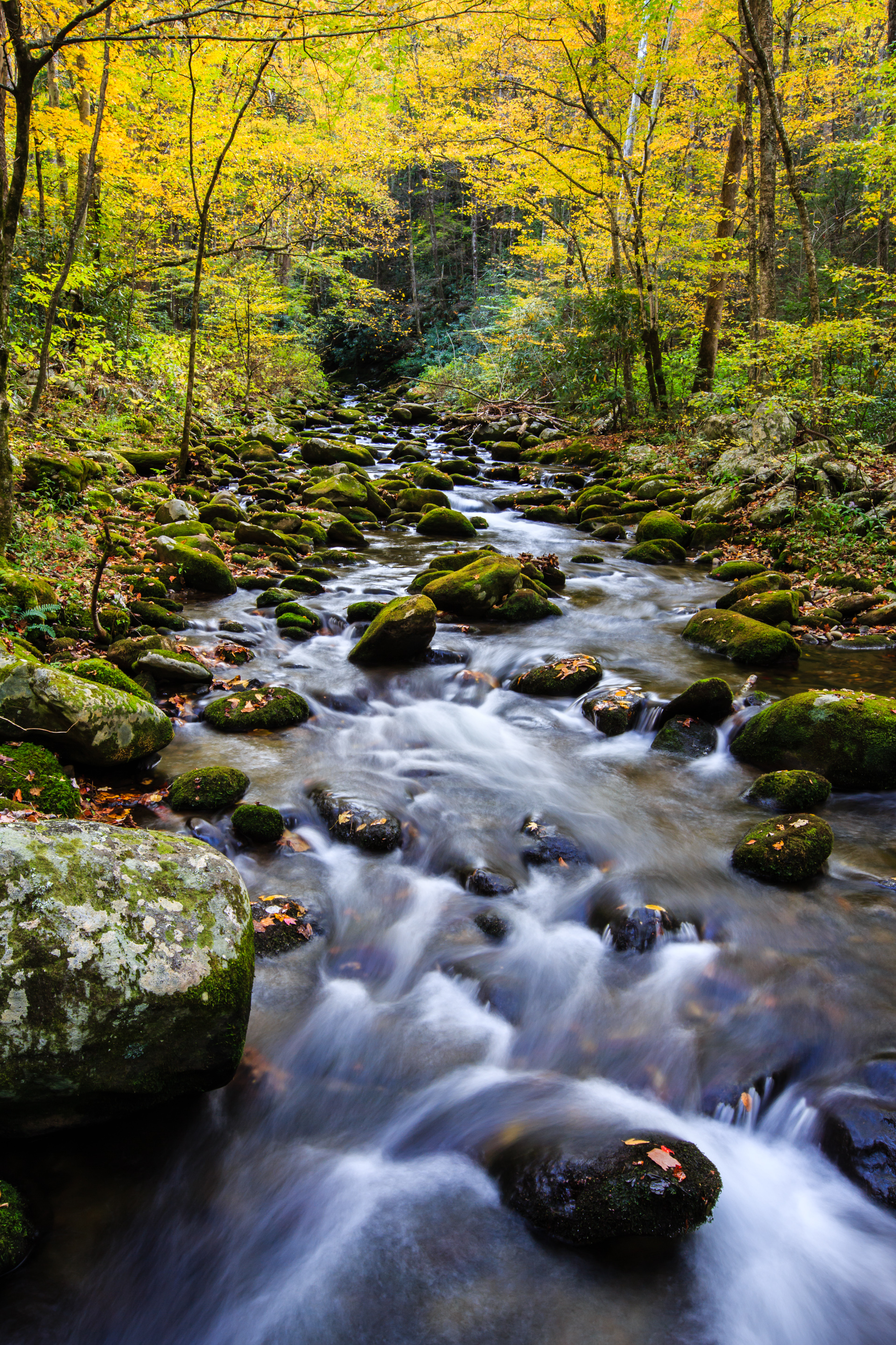 Fall Colors In Great Smoky Mountain National Park