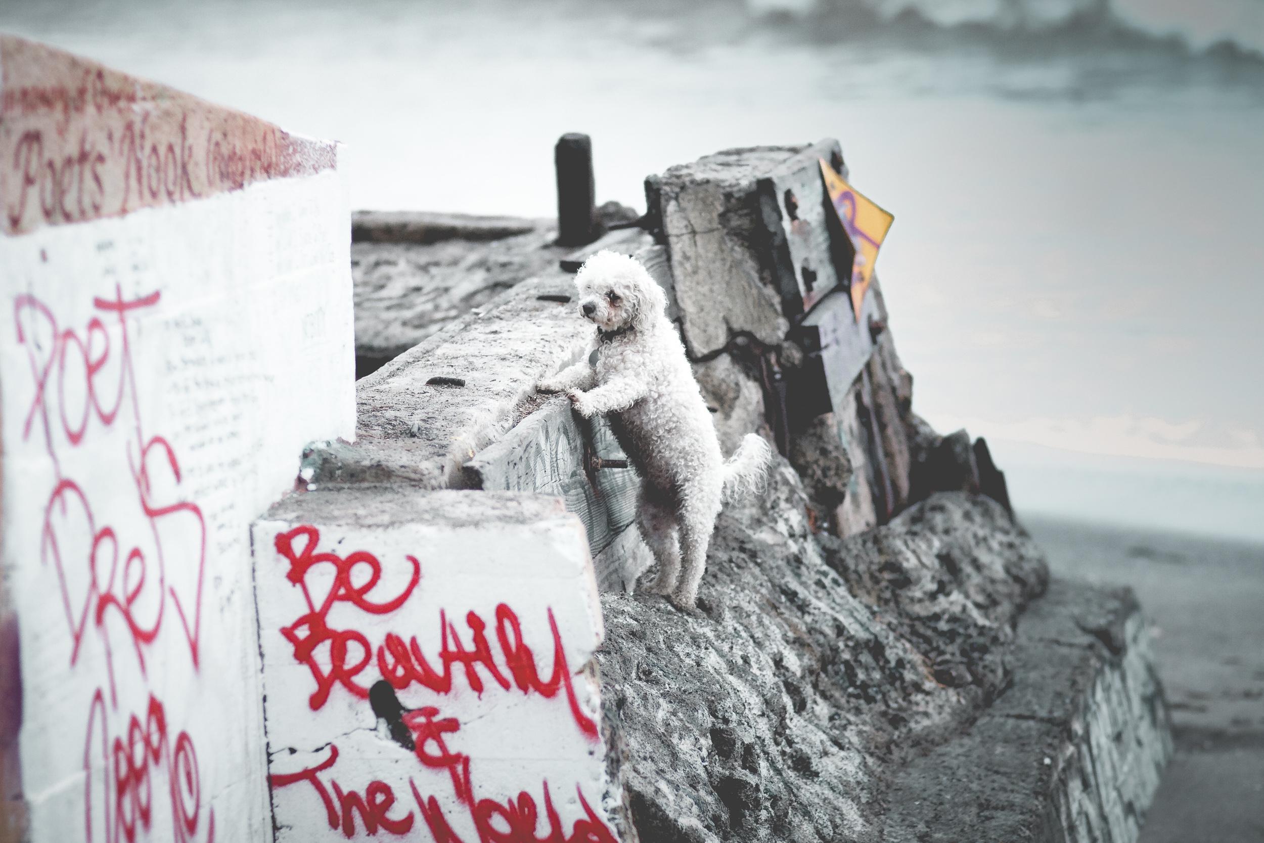 dog on the beach.jpg