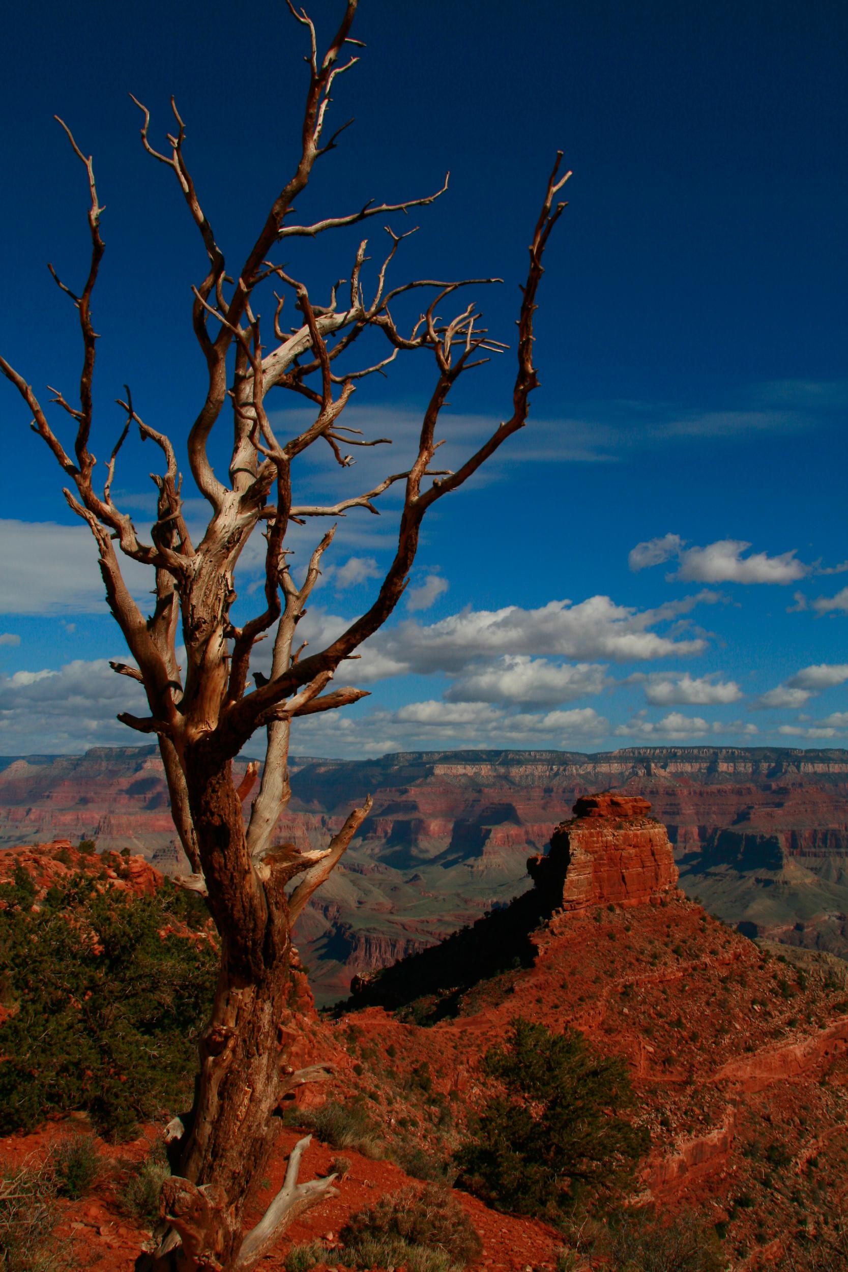 Natural survivor at Grand Canyon.jpg