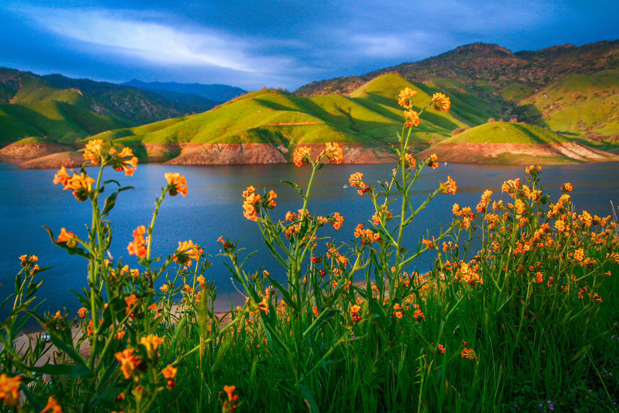 flowers at Kaweah Lake