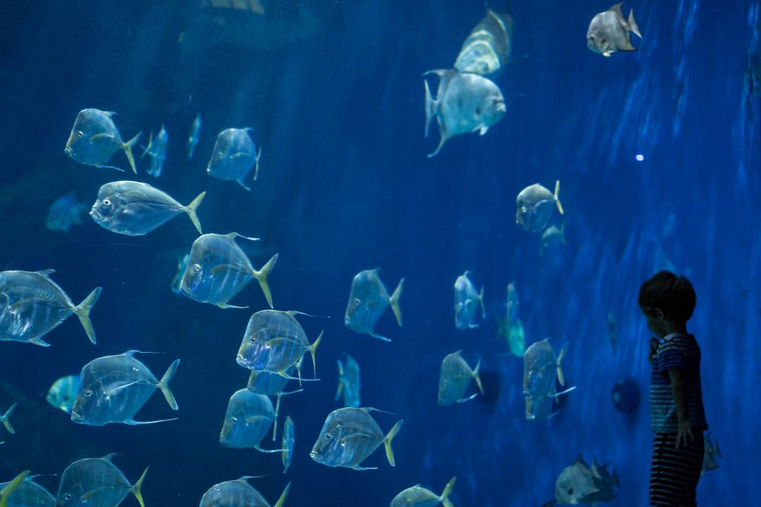Virginia Beach Aquarium 2018-09-08-009.jpg