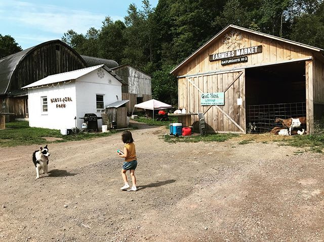Picking up some stuff from the farm and we were greeted by this amazing dog who wanted us to throw rocks that he could catch and bring back to us #schohariehouse #catskills #catskillmountains #visitcatskills #upstateny #upstatenewyork #upstater #escapeny #escapenewyork #escapebrooklyn #escapebklyn #iloveny #ilovenewyork #retreat #weekendgetaway #getaway #airbnb #vacationrentals #travel #instatravel