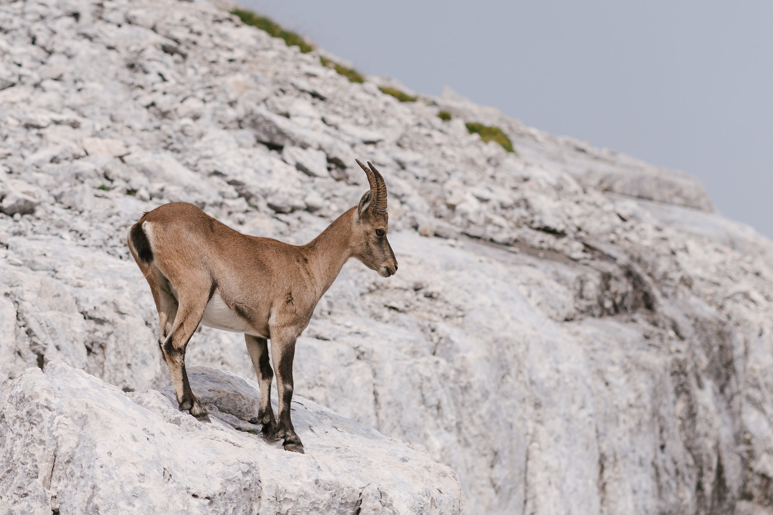 MOUNTAINS - A collection of 24 Alpine landscapes and animals from our beautiful country.