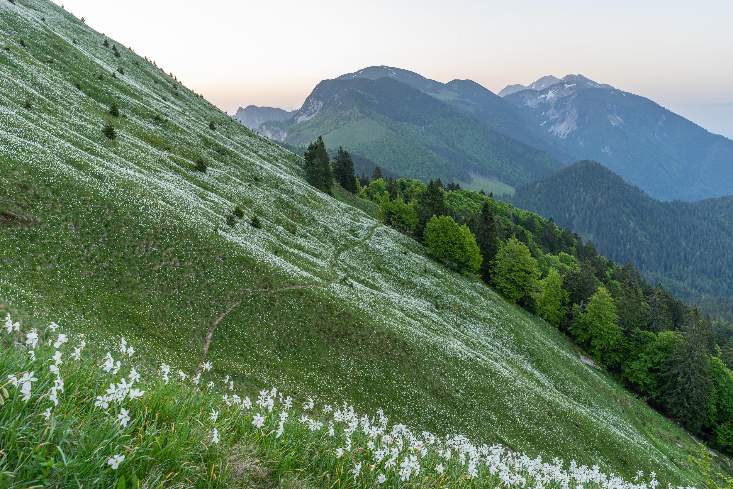 Mt. Golica (1836 m). Karawanks, Slovenia.