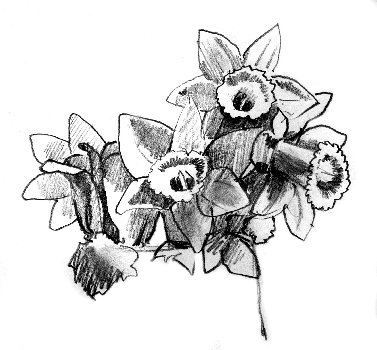 daffodils copy.jpg