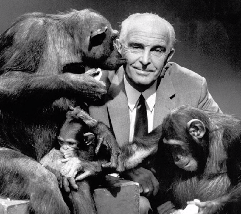 Dr. Grzimek, who brought chimpanzees from Europe to Rubondo