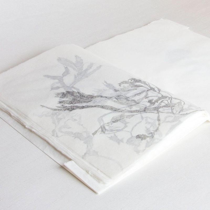 Pencil drawings of seaweed in handmade artist's book