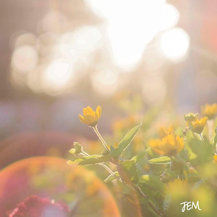 JEM-BeautyfullyMe.jpg