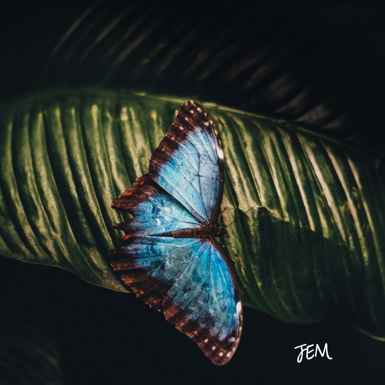 JEM-Rebirthing.jpg