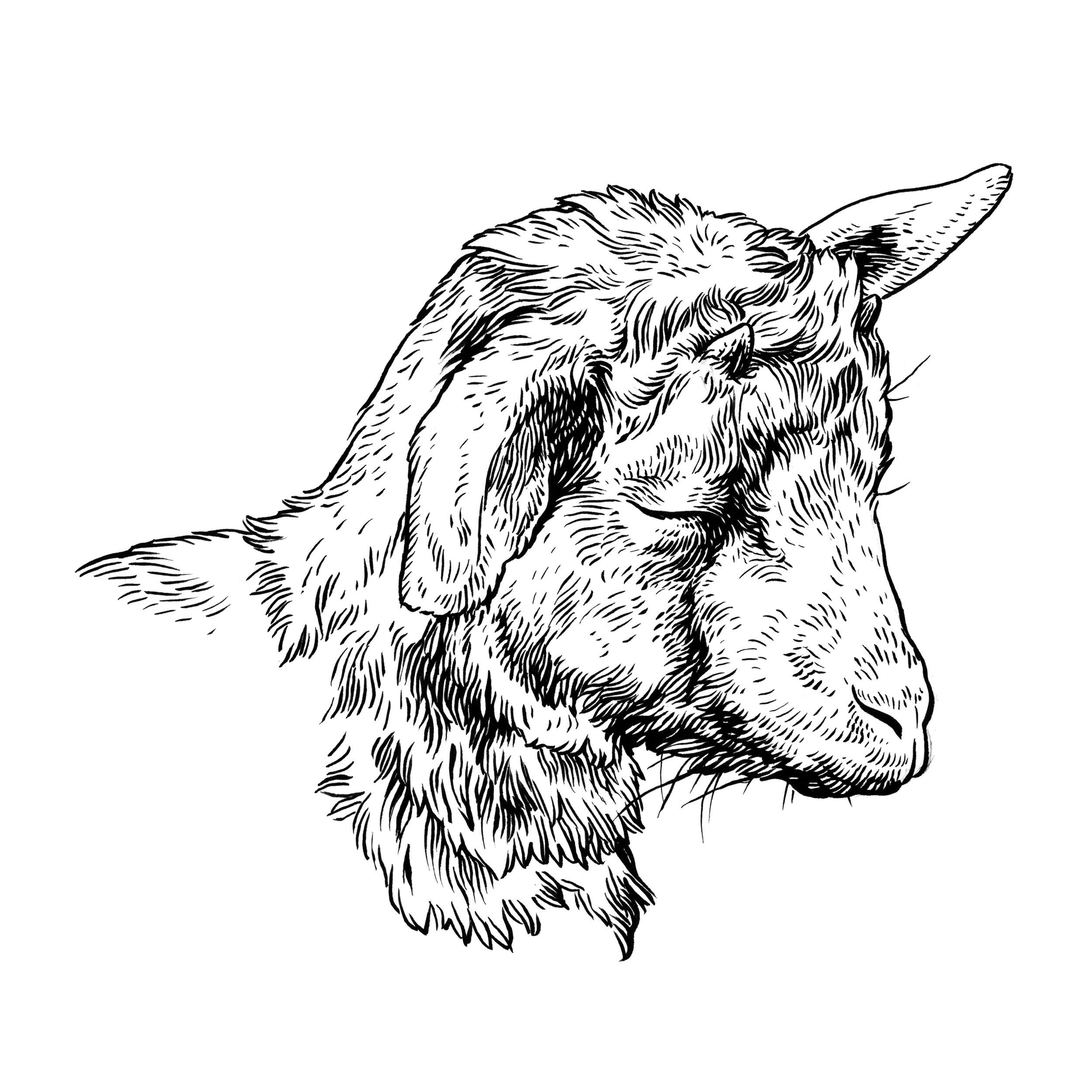 baby goat_EDIT.jpg
