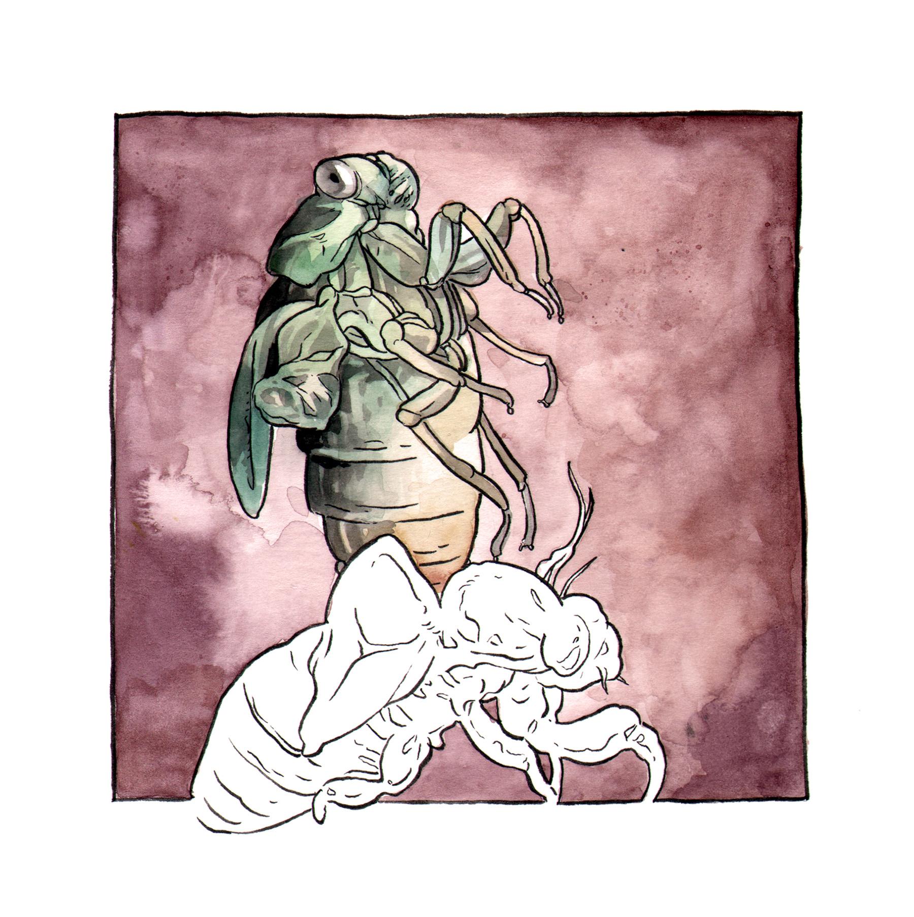Cicada Kind.jpg
