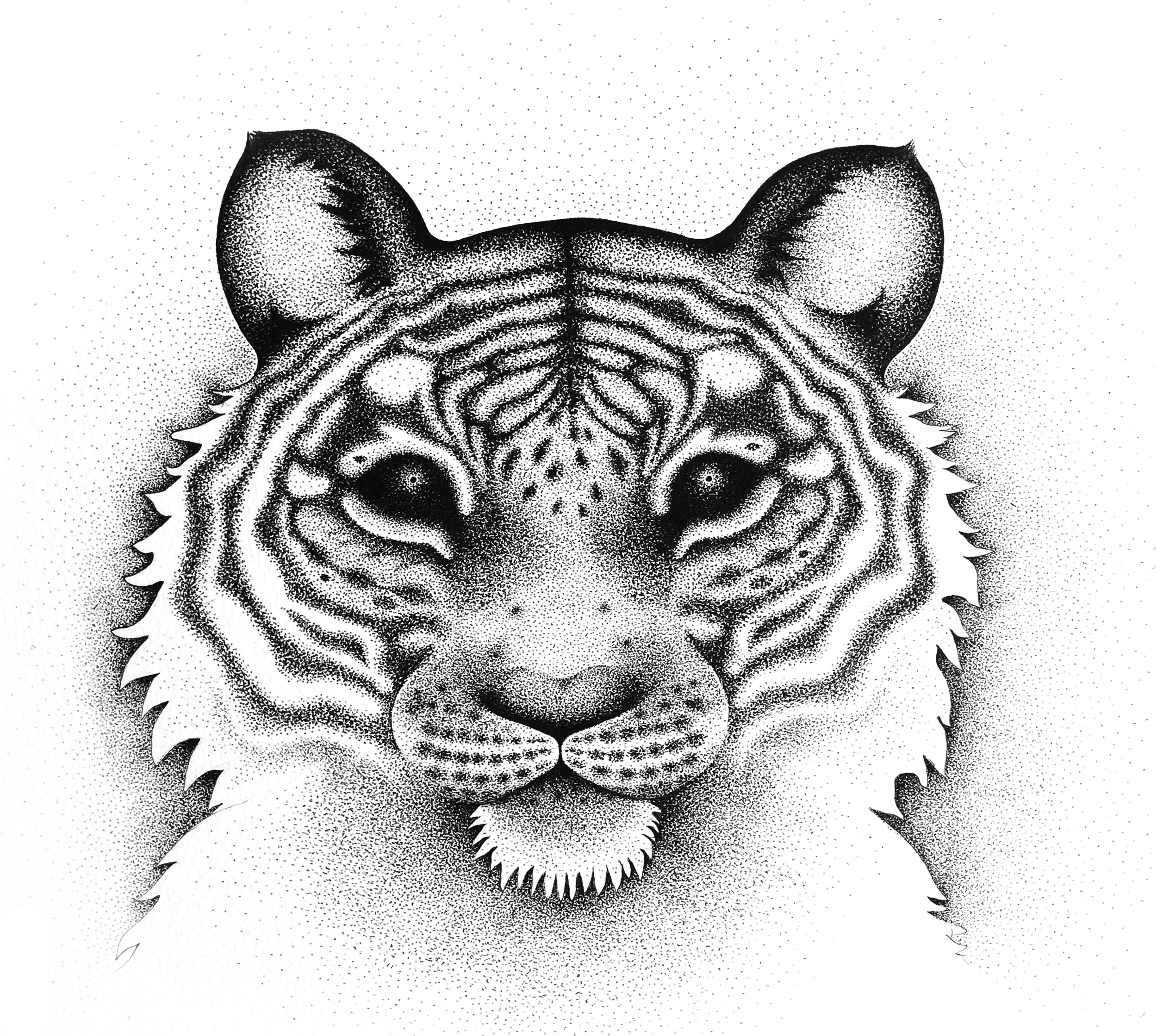Black and white Tiger illustration, originally drawn with a fine liner pencil. Printed on fine art Hahnemühle German Etching 310 g paper. Signed. Available in sizes 30x30cm and 40x40cm.  Contact  me for purchase information.
