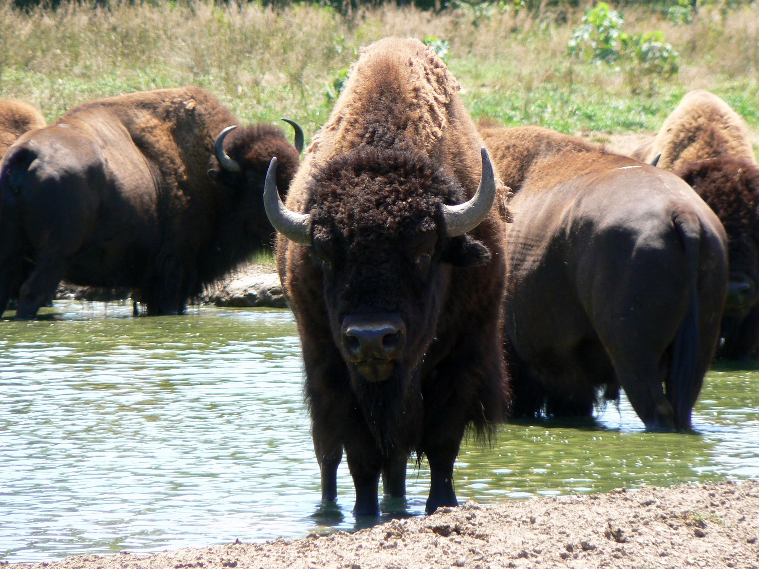 Like the Bison, we don't plan on leaving South Dakota any time soon.