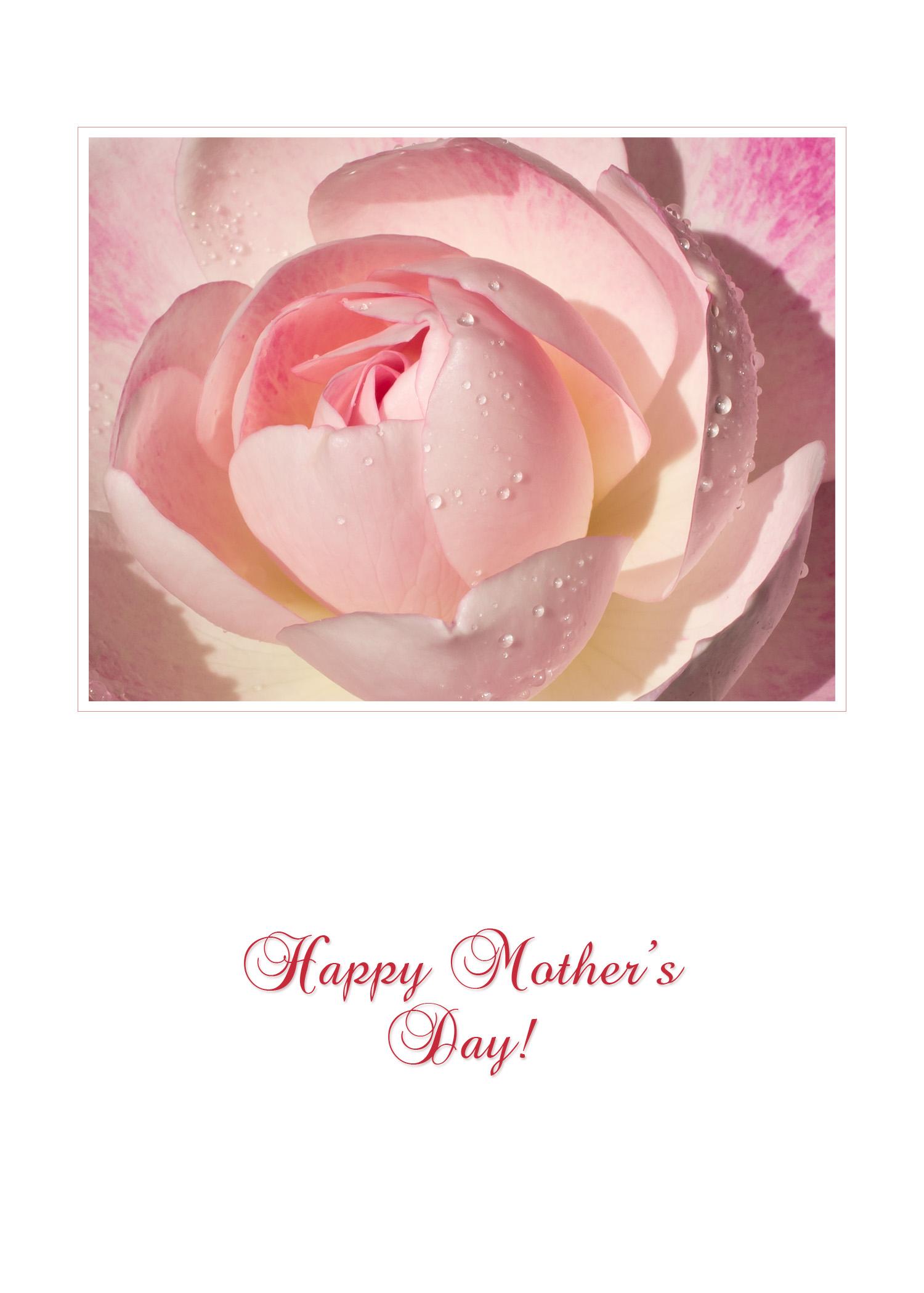 MothersDay_pink_rose_frame5x7.jpg