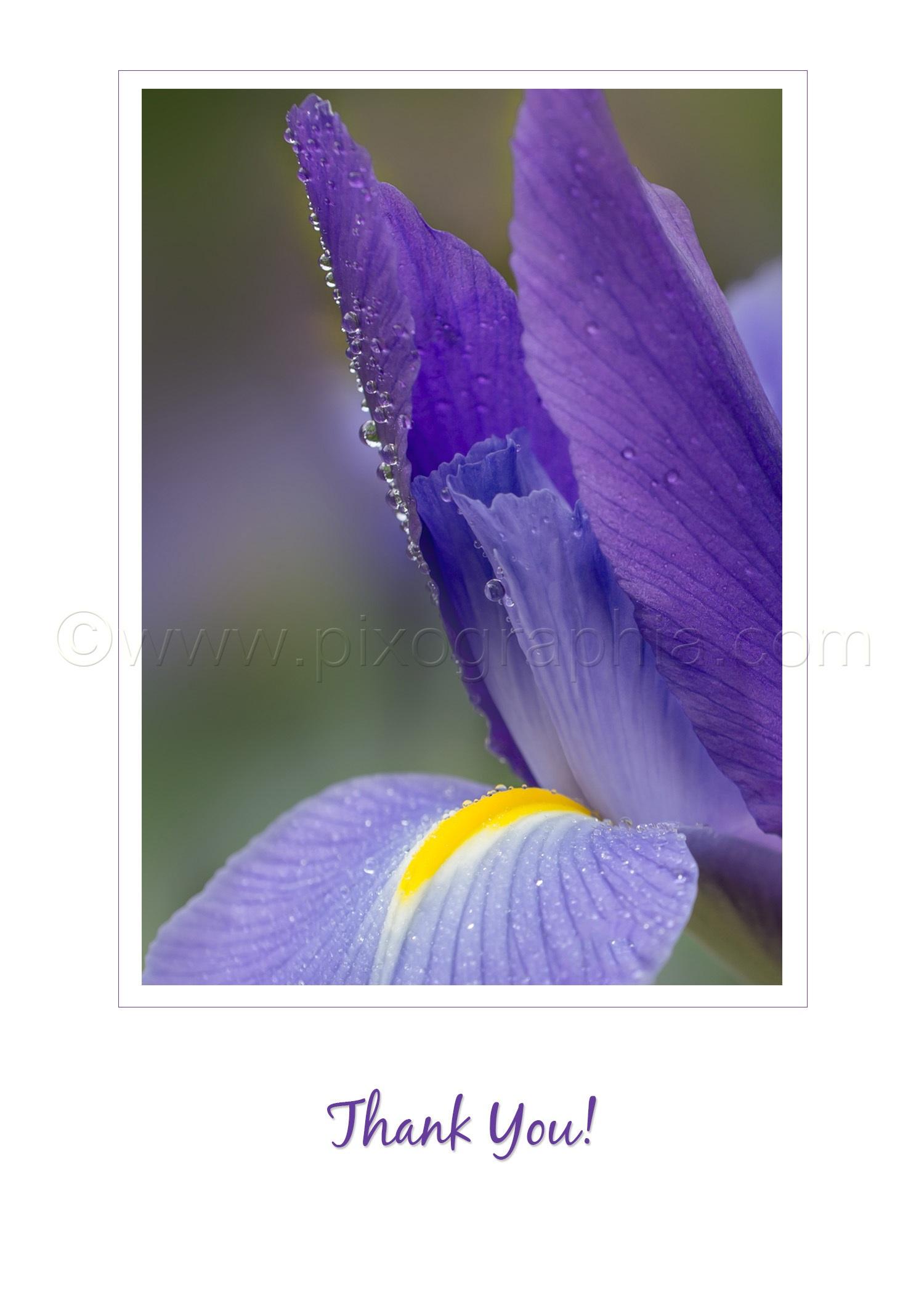 Iris_ThankYou_vertical.jpg