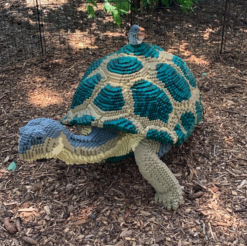 Galapagos Tortoise and Darwin Finch