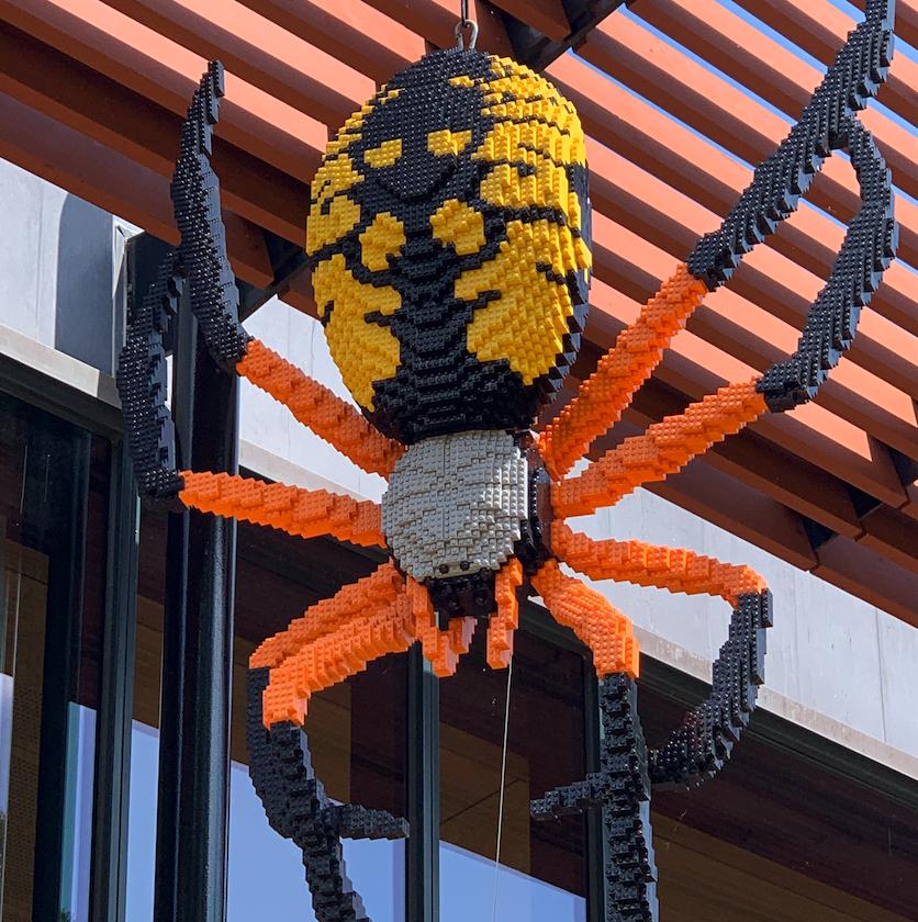 Corn Spider