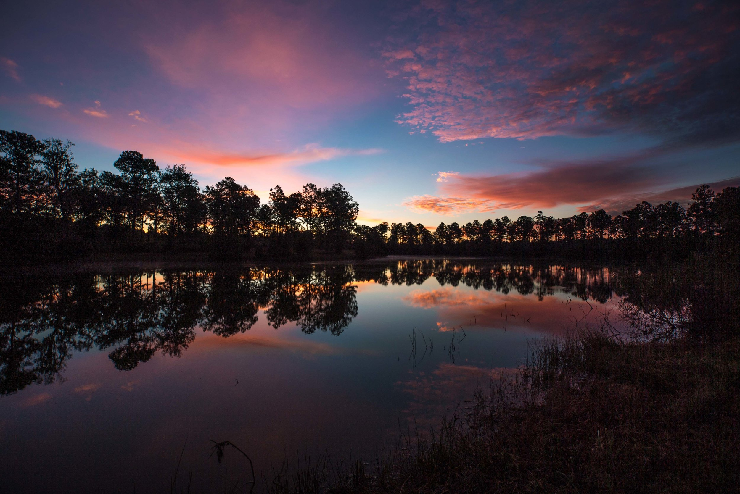 Palmetto Lake 2.jpg