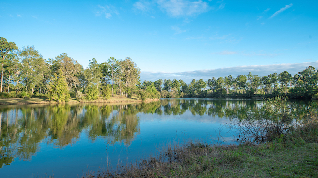 Palmetto Lake.jpg