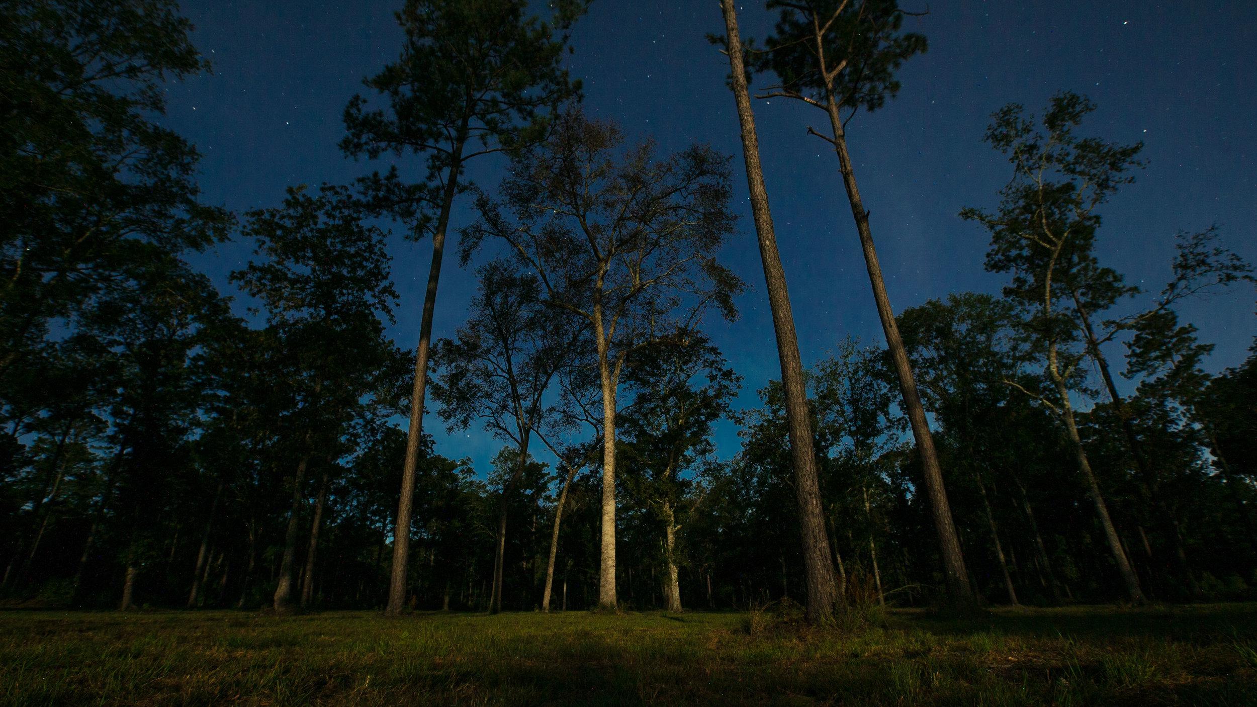 Fox Den Forest.jpg