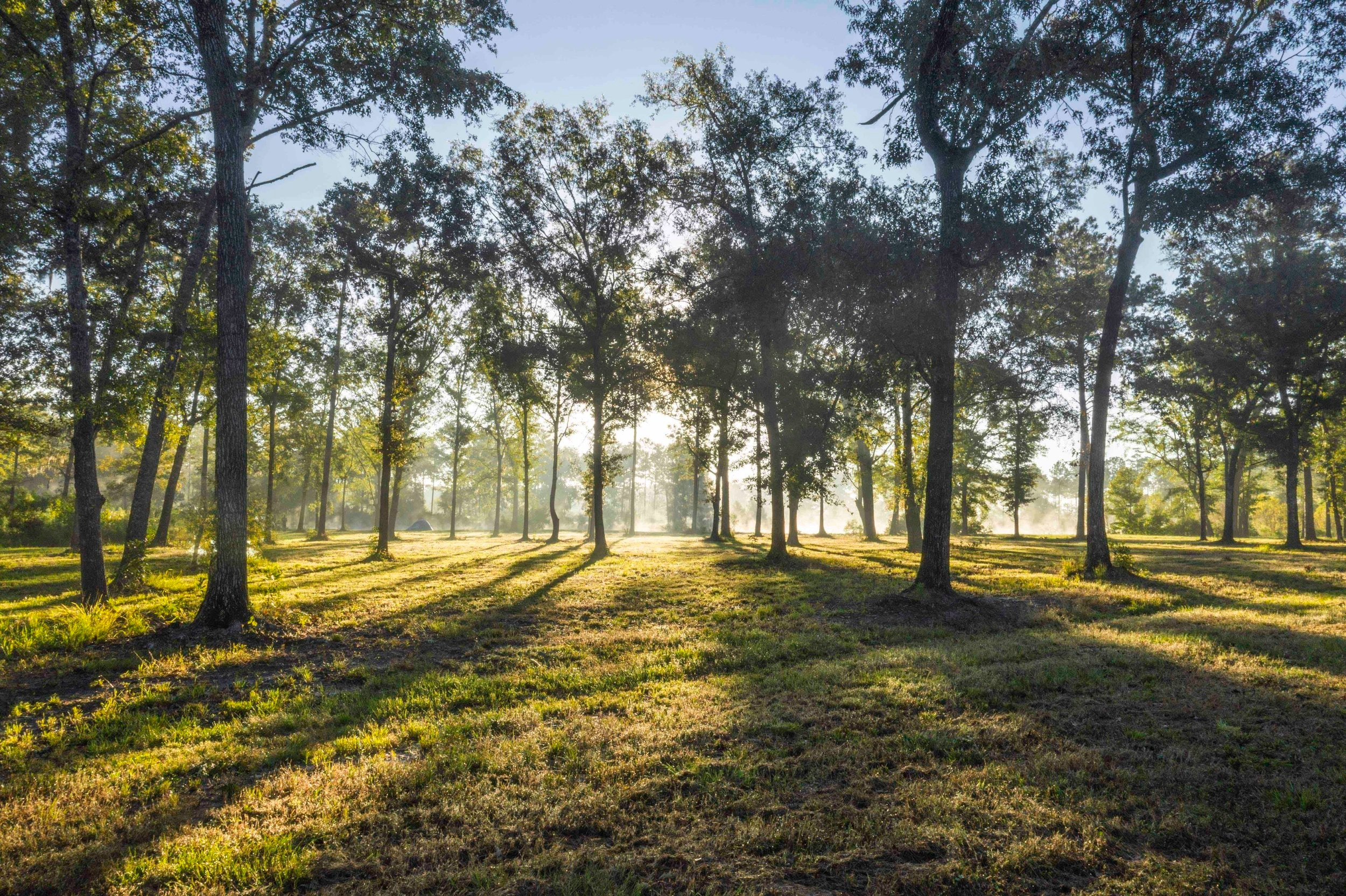 Fox Den Forest