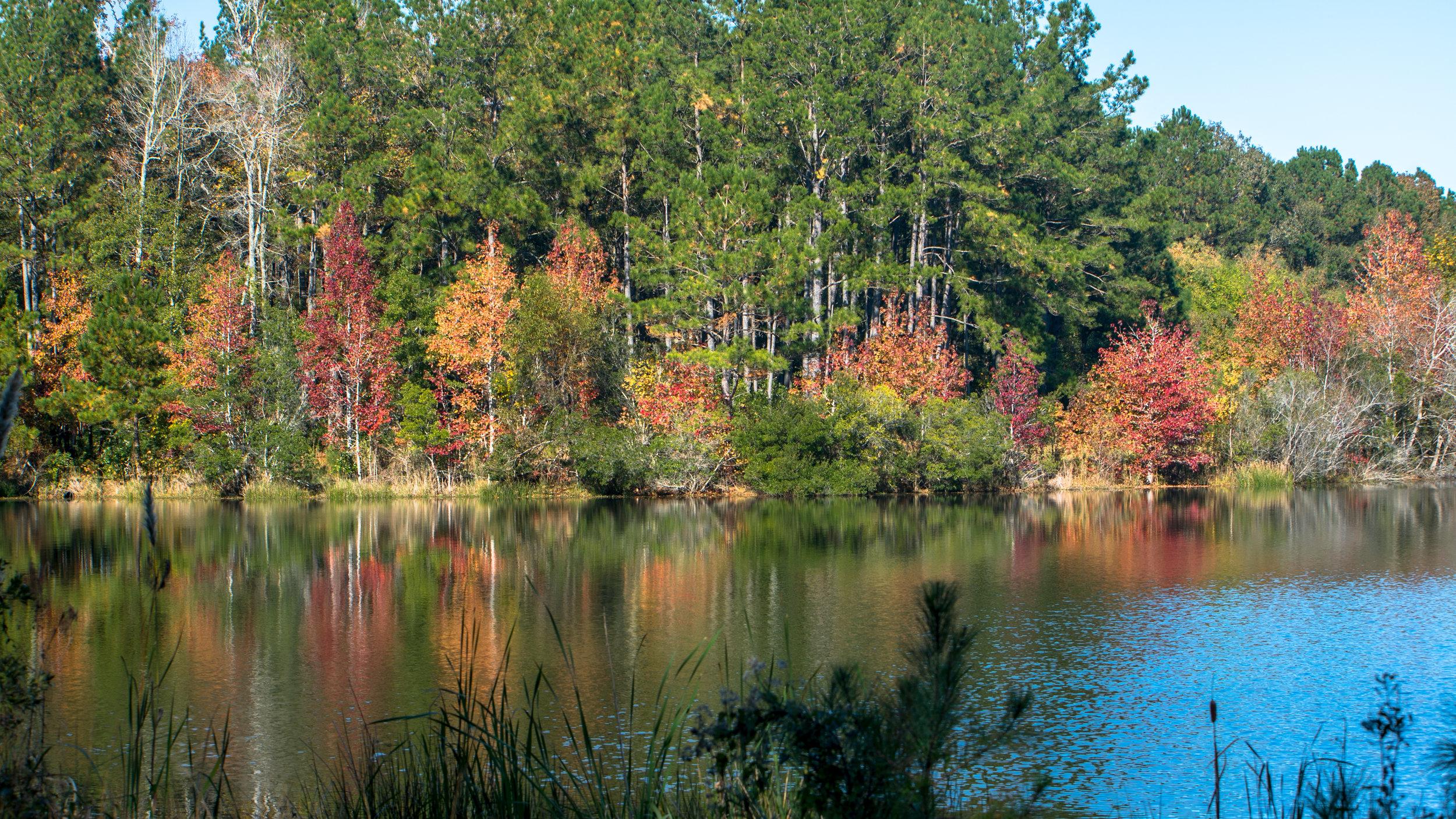 Woodlands Fall-3.jpg