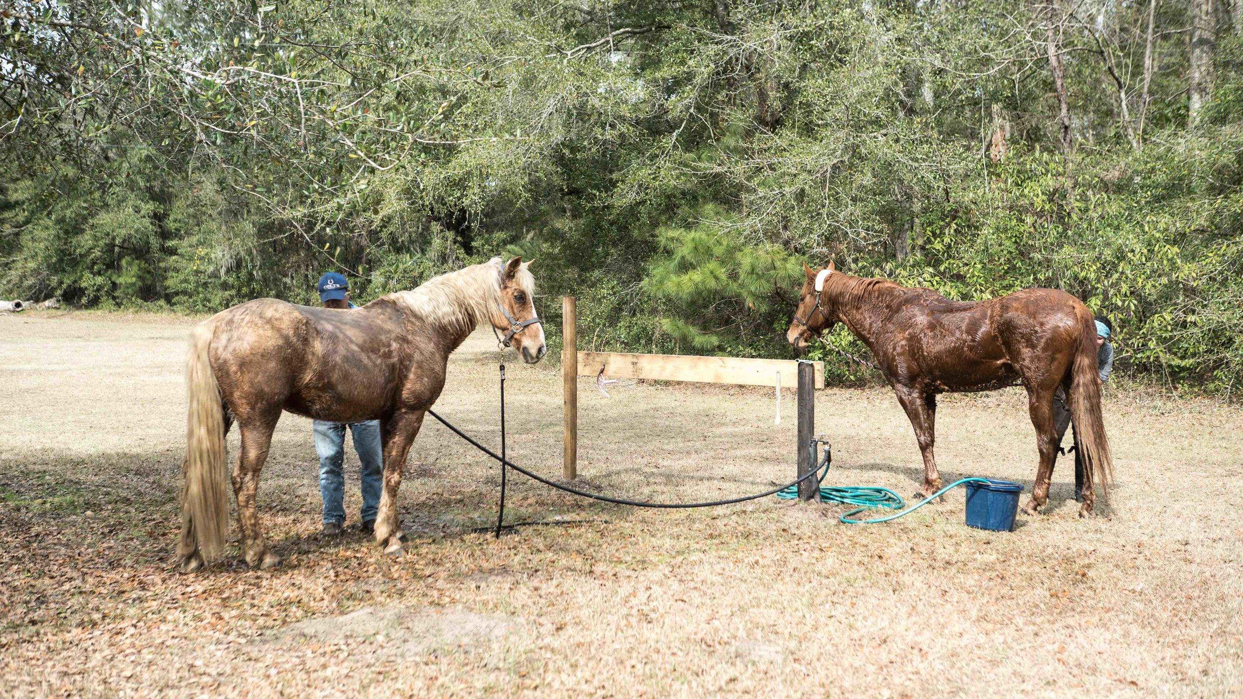 Equestrian (2).jpg