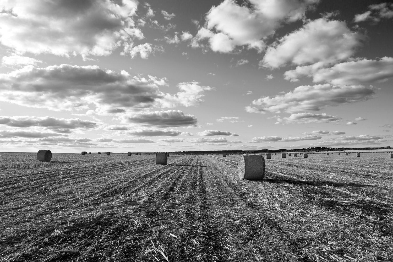 Field-Kingsthorpe-Australia-03.jpg
