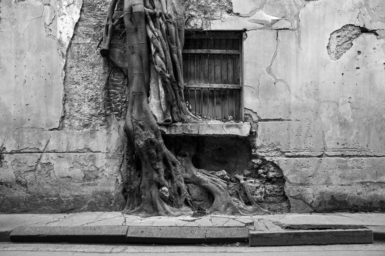 A tree growing through a wall in Old Havana, Cuba