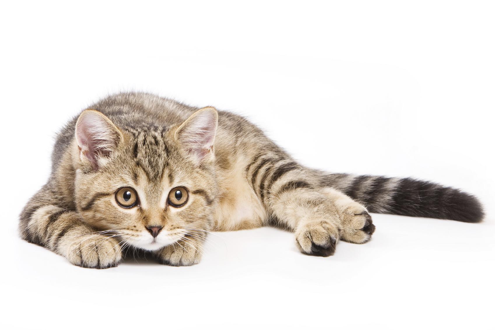 stock-cat.jpg