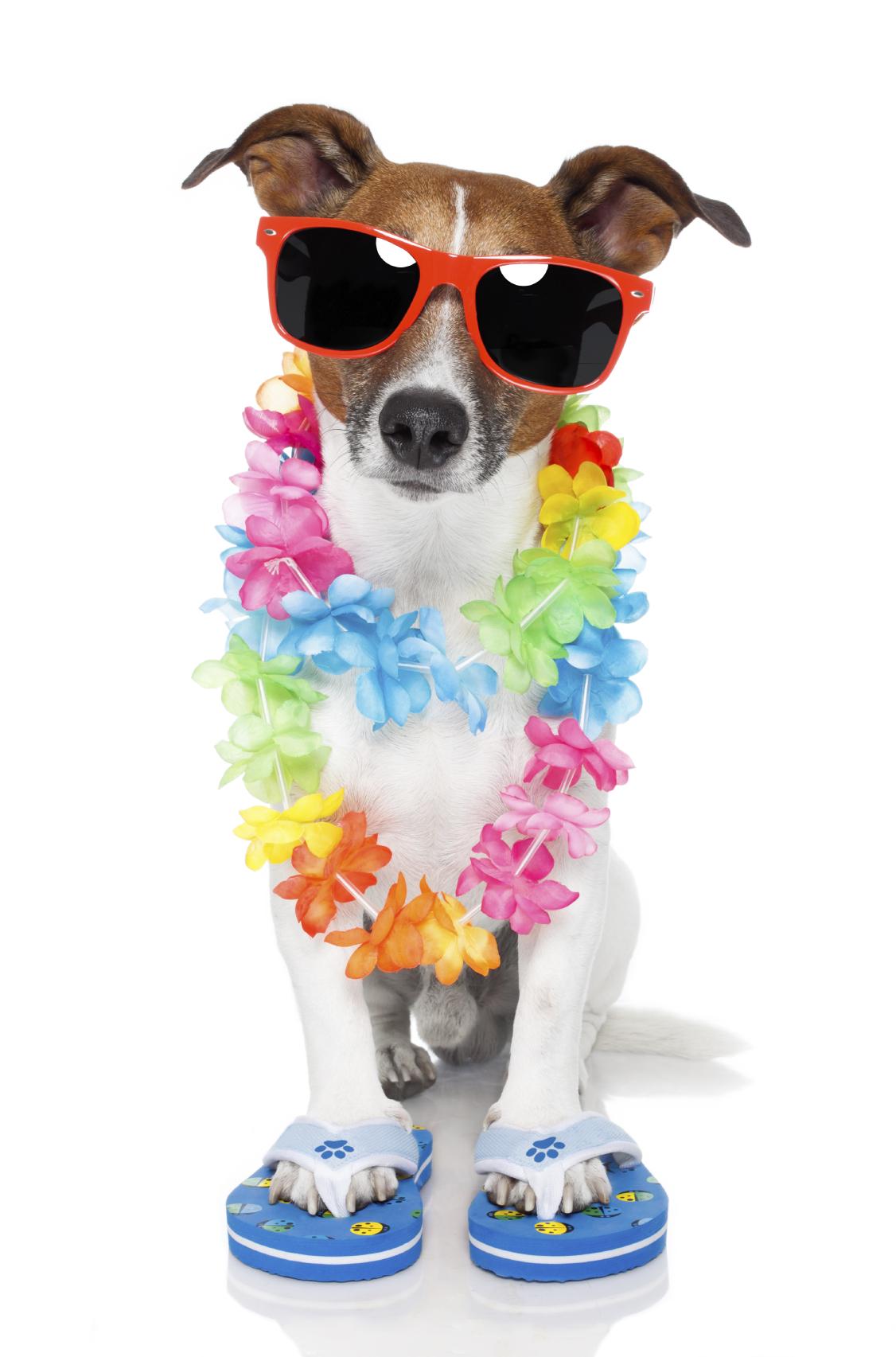 stock-holiday-dog.jpg
