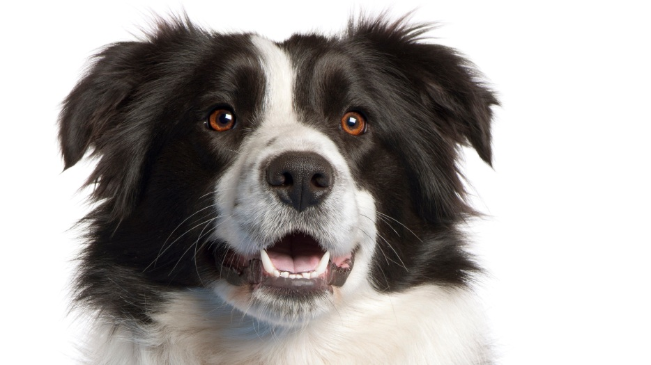 stock-dog.jpg