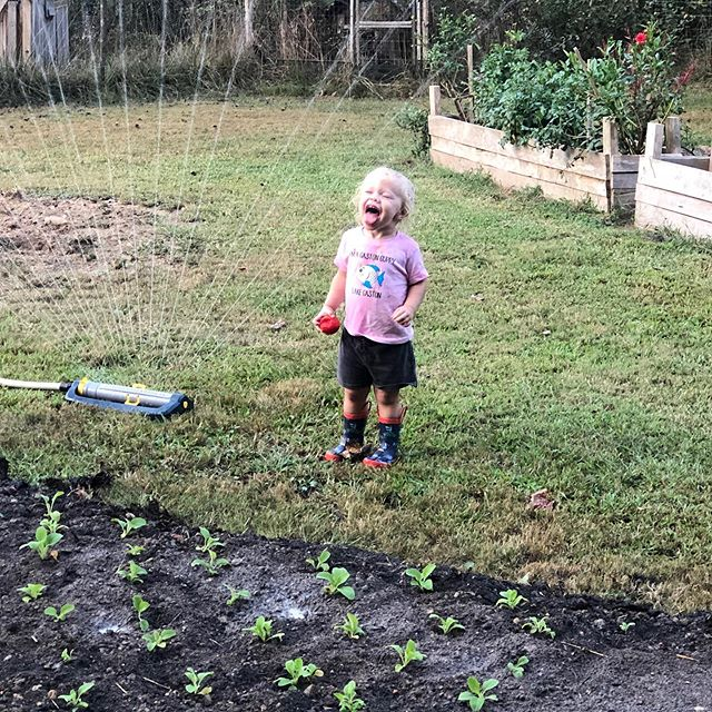 Eating a hot tomato off the vine and drinking from the sprinkler. This child is more country than me.